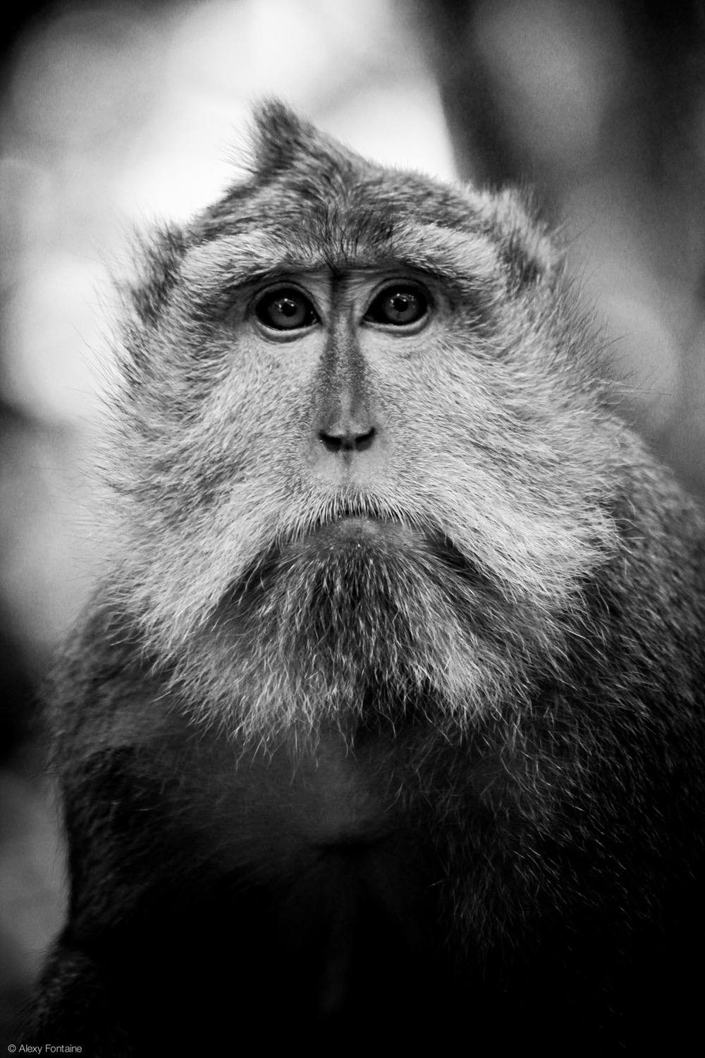 MONKEY FOREST - PERSO